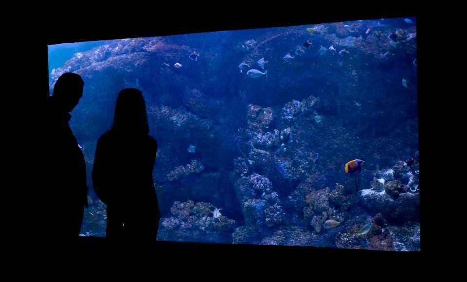 Sztuczna rafa koralowa w akwarium z wodą słoną