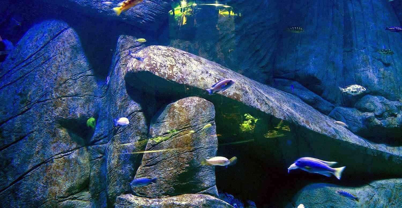 Dekoracje skalne w akwarium Malawi kompleksu Oceanika