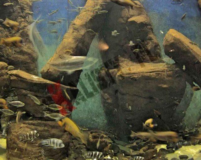 akwarium tanganika malawi sztuczne skały