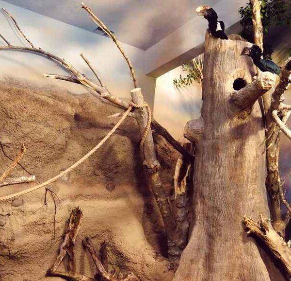 Woliera dla dzioborożców w zoo warszawskim