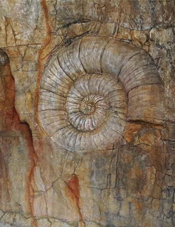 Amonit wbudowany w sztuczną skałę groty