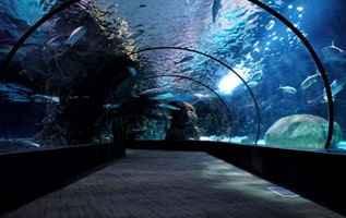 sztuczna rafa koralowa i skały podwodne w oceanarium