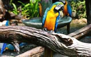 sztuczne drzewo w wolierze dla papug w zoo