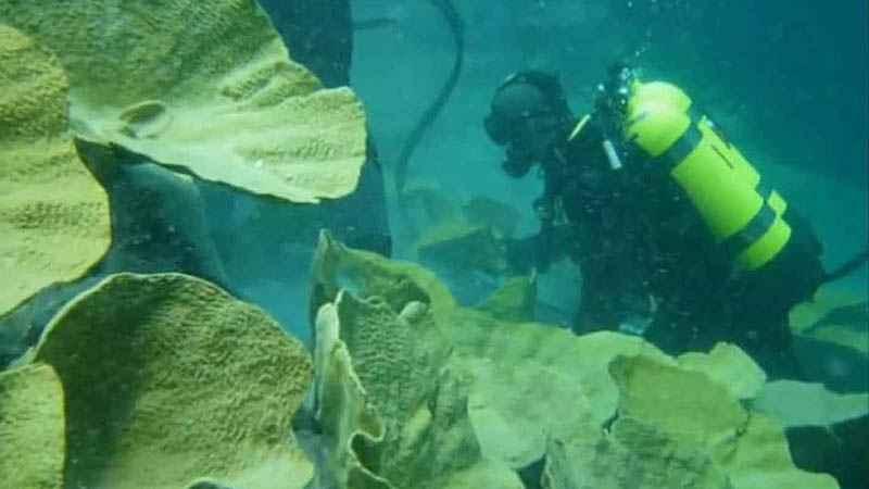 Montaż sztucznych koralowców w Afrykarium