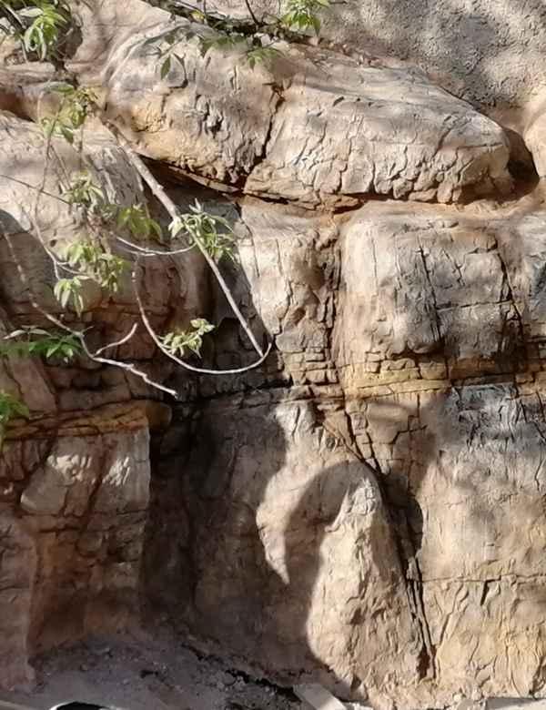 Orientarium sztuczna grota na wybiegu lwów azjatyckich