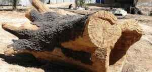 Oferta na sztuczne drzewa