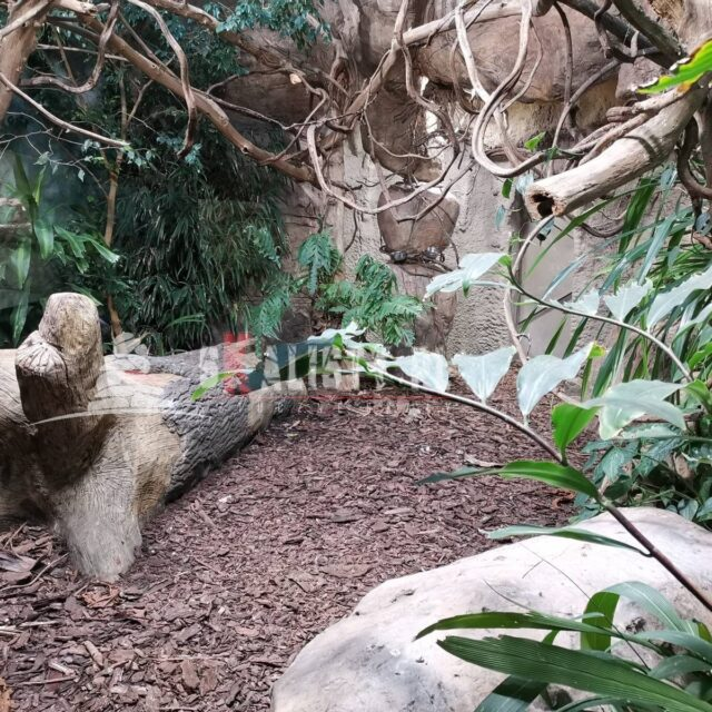 sztuczny konar drzewa zoo